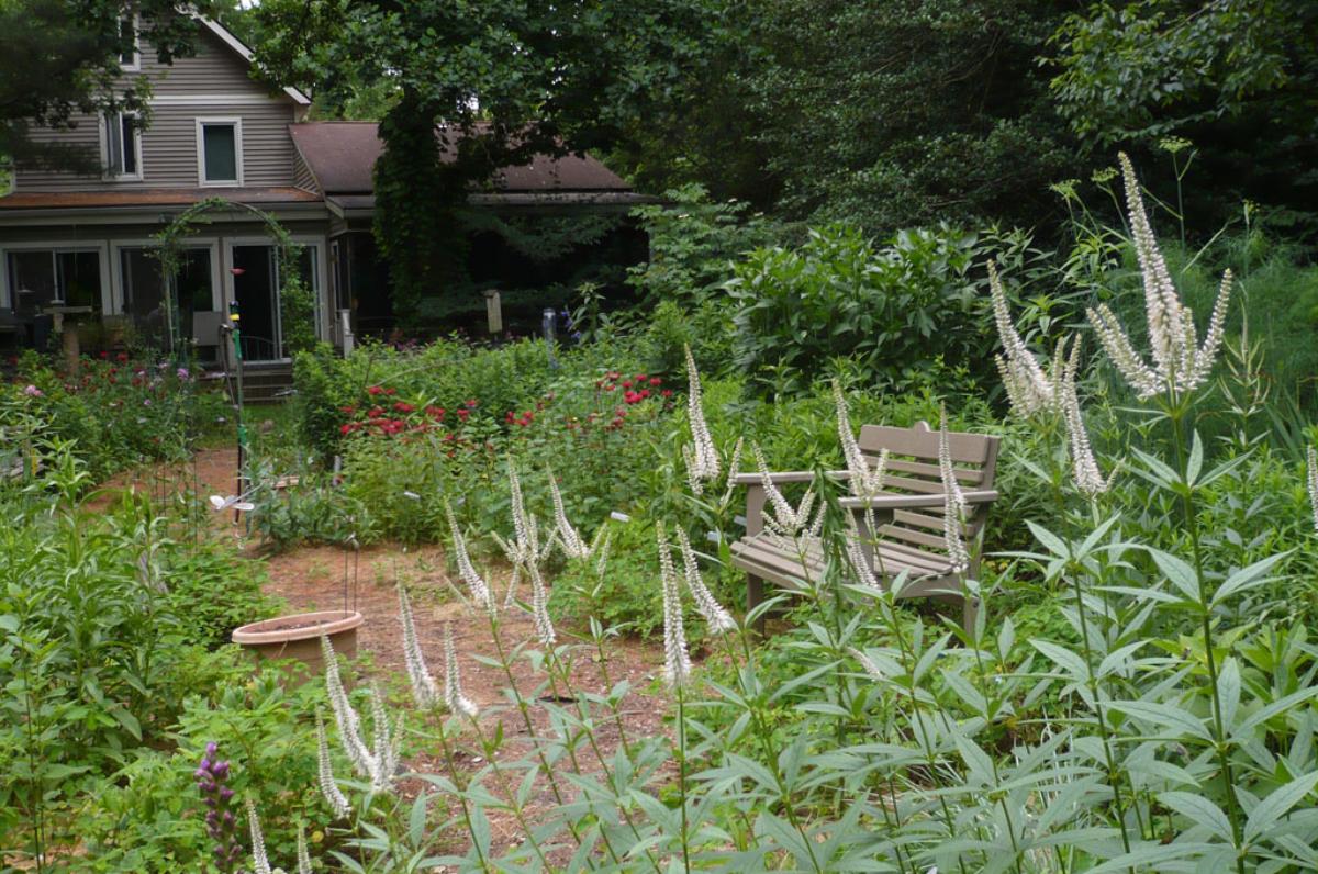 Aprenda como atrair polinizadores para o jardim