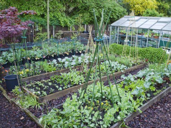 plantas para colher ano inteiro