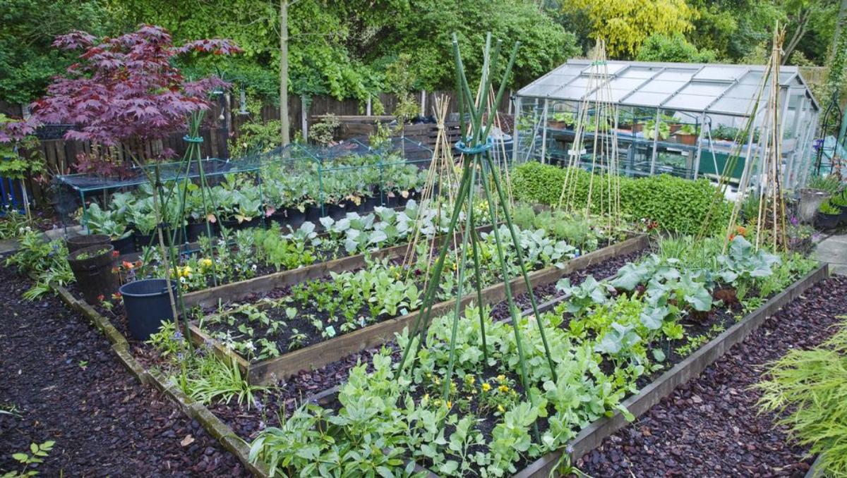 Abundância: 15 plantas perenes para colher o ano inteiro