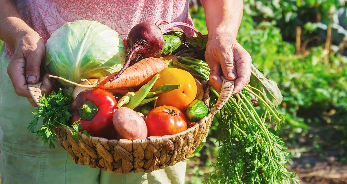 7 alimentos saudáveis para um cultivo sustentável