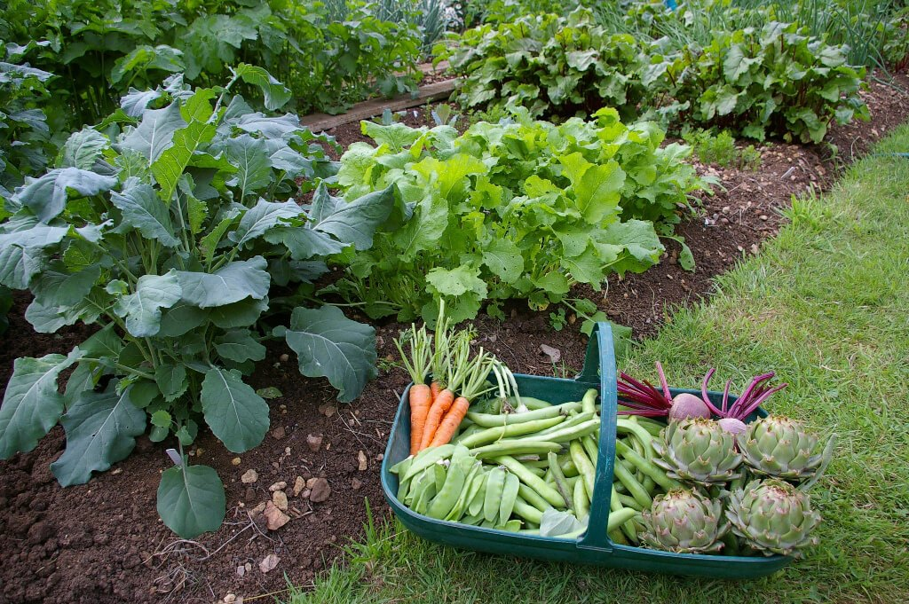 6 vegetais com ótimo custo-benefício para plantar em casa