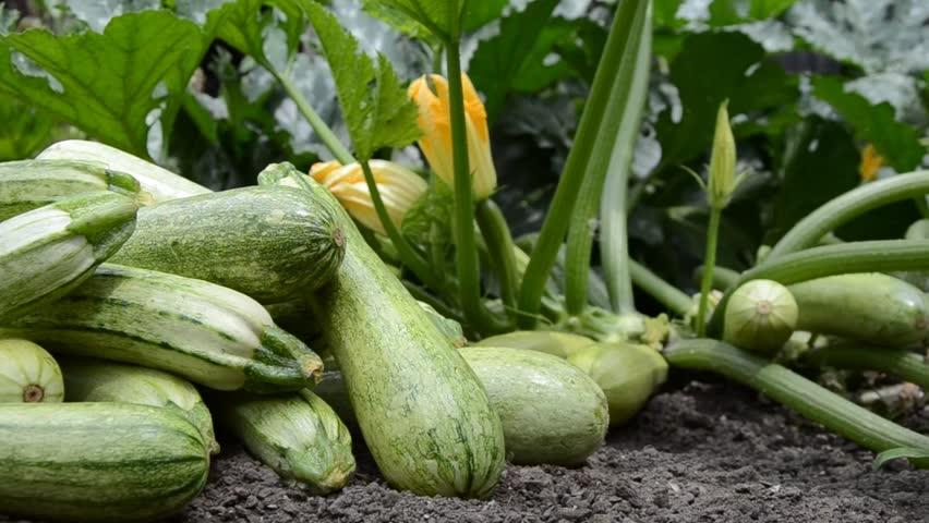 cultivo sustentável